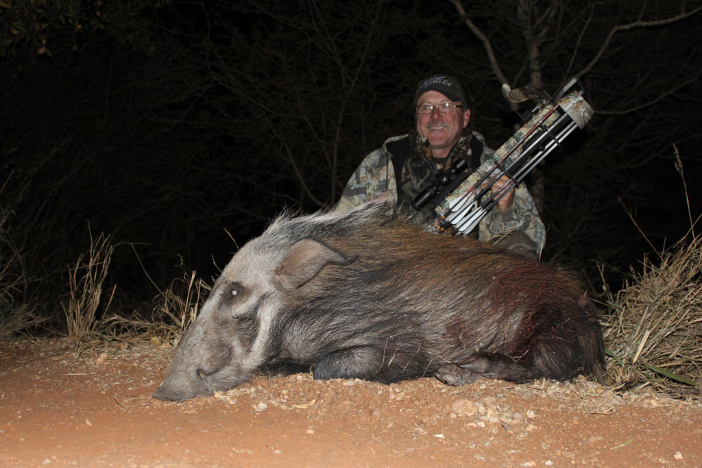 Bill Troubridge - Bush Pig, Koringkoppie Safaris