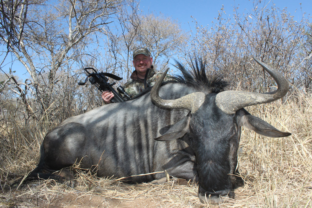 Dan Wallace - Blue Wildebeest, Koringkoppie Safaris