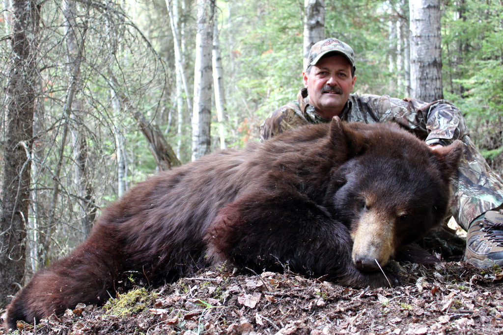 Jerry Peterson - Alberta Color-Phase Bear